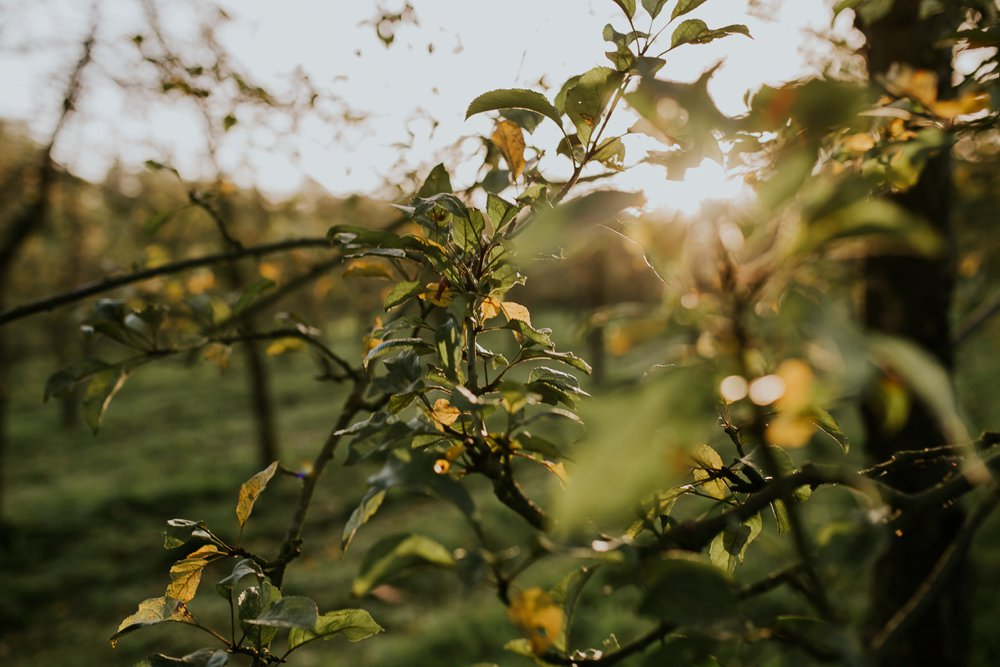 mariage-automne-jardins-pays-d-auge-cambremer-livarot_0001.jpg